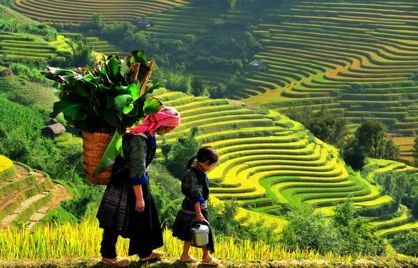Campos De Arroz En Vietnam Una Visita Obligada Para Los